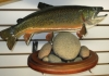Brook Trout with Pedestal